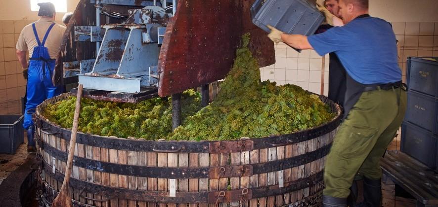 AR Lenoble Newsletter : Nos réflexions sur les vins clairs 2016