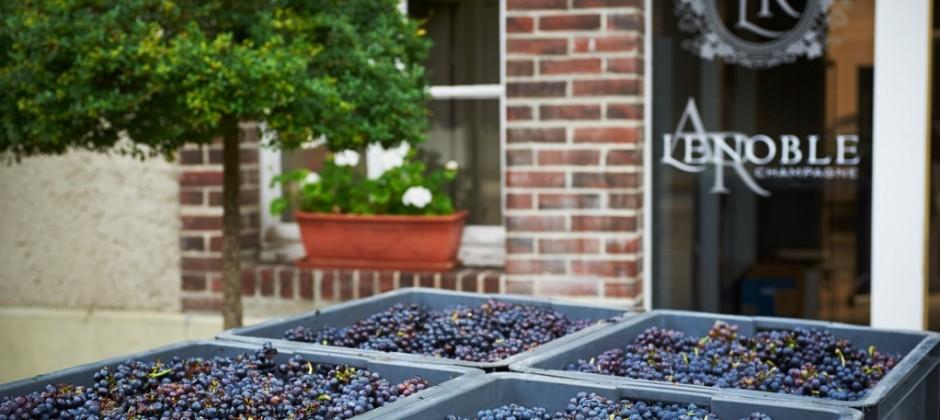 Le chant des artisans ! La Revue du Vin de France voit en la maison AR Lenoble une des pépites très prometteuses pour la Champagne !