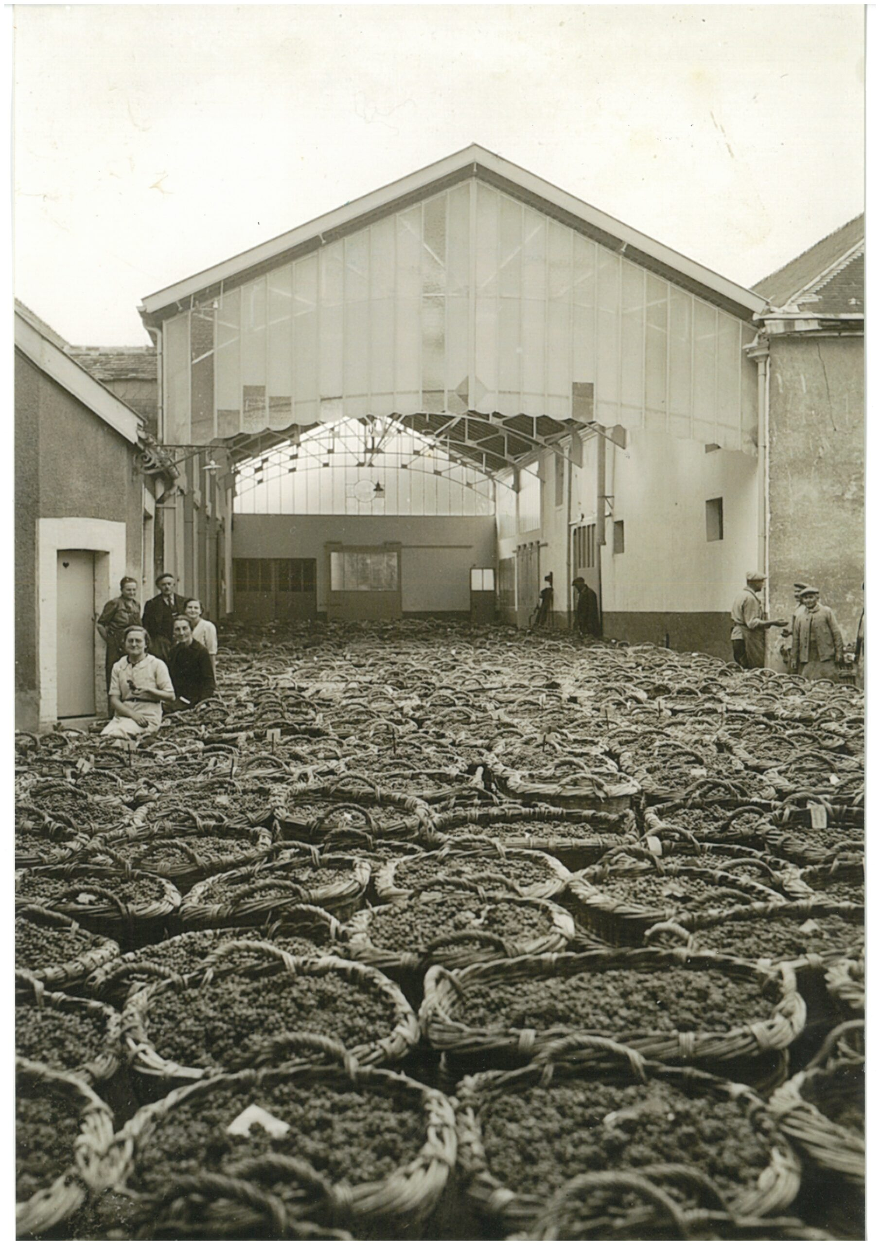 Champagne AR Lenoble: trying to celebrate 100 years in a pandemic