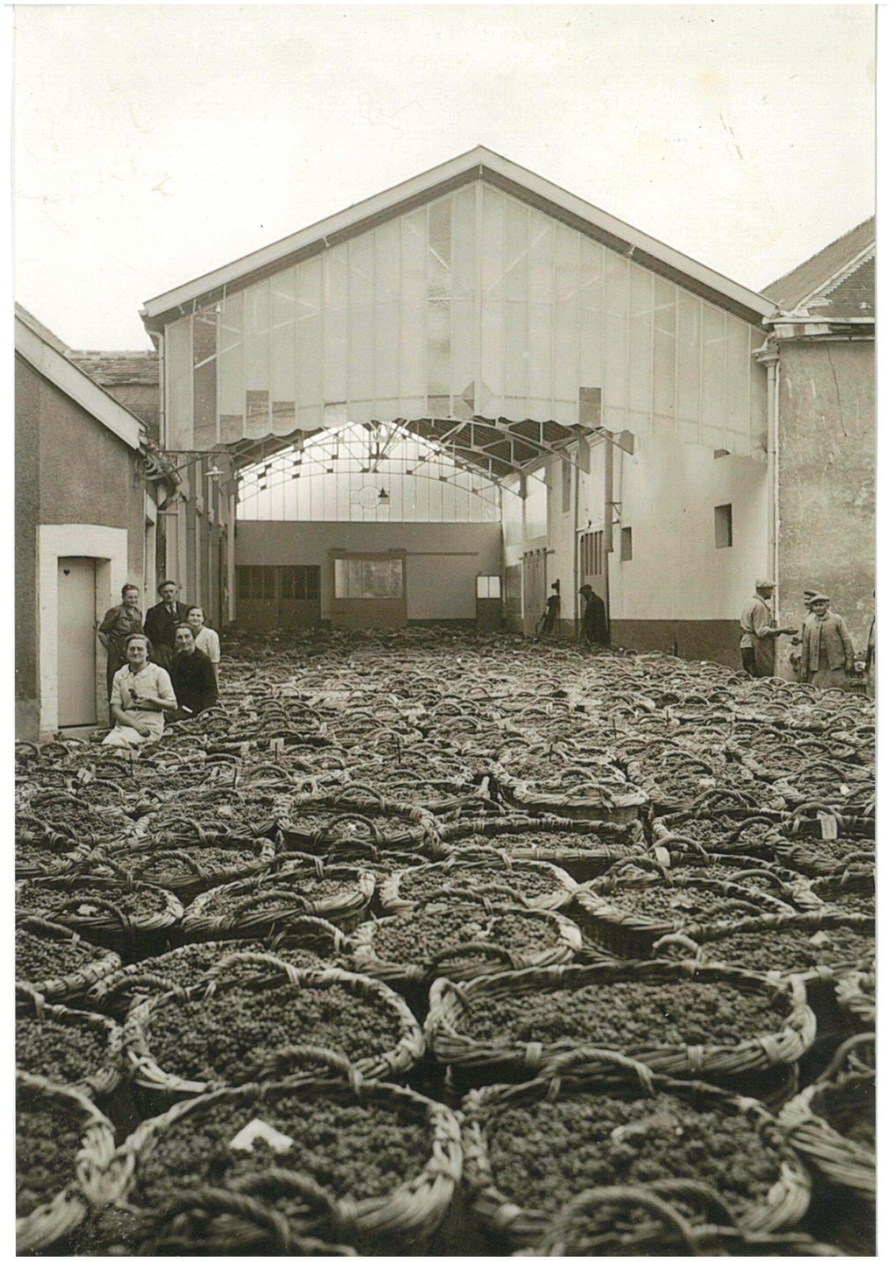 At the start of the 20th century, life in the vineyards was extremely hard… Au début du XXème siècle, la vie dans le vignoble était dure…